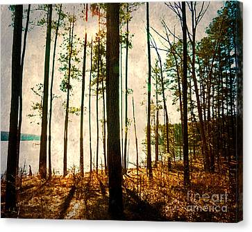 Sunlight Through The Trees Canvas Print