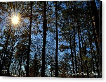 Canvas Print featuring the photograph Sunlight Through Trees by Tara Potts