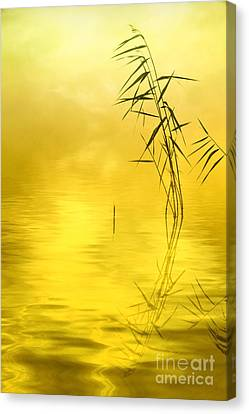 Harmonious Canvas Print - Sunlight by Veikko Suikkanen