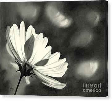 Sunlit Daisy Canvas Print by Nicola Butt