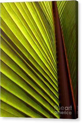 Sunlit Leaf Canvas Print