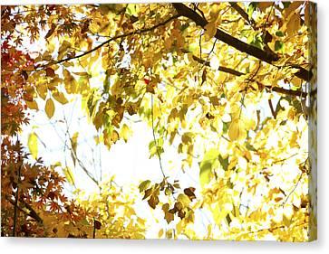 Sunlit Leaves Canvas Print by Les Cunliffe