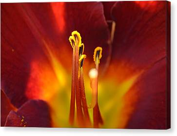 Canvas Print featuring the photograph Sunlit Lily by David Porteus
