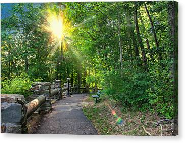 Sunlit Path Canvas Print by Mary Almond