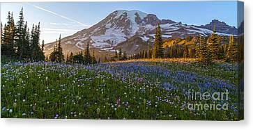 Sunlit Rainier Meadows Canvas Print by Mike Reid