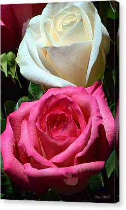 Sunlit Roses Canvas Print by Marie Hicks