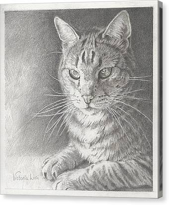 Sunlit Tabby Cat Canvas Print by Victoria Lisi