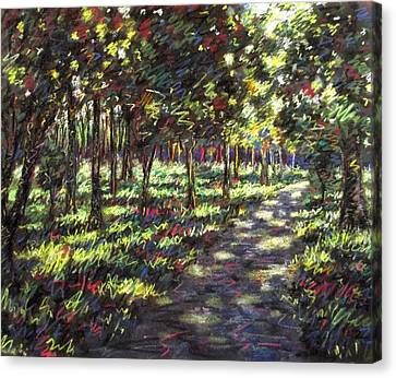 Giclee Trees Canvas Print - Sunlit Trees by John  Nolan