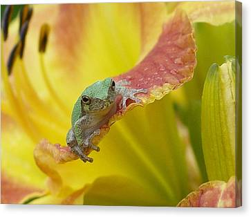 Sunning In A Day Lily Canvas Print