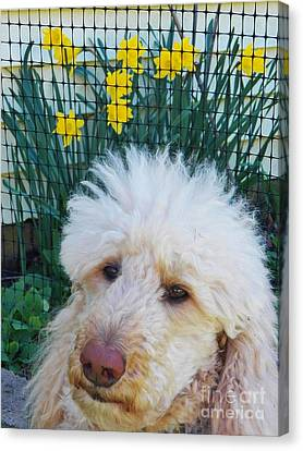 Sunny And The Daffodils Canvas Print by Judy Via-Wolff