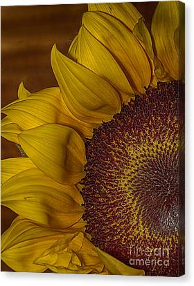 Sunny Canvas Print by Anne Rodkin