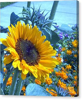 Sunny Blue Canvas Print by Arlene Carmel
