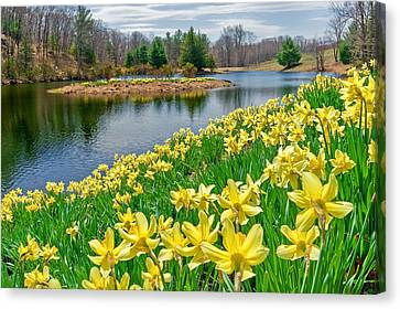 Rural Landscapes Canvas Print - Sunny Daffodil by Bill Wakeley