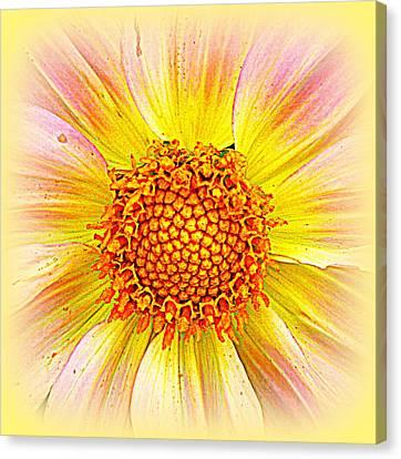 Sunny Dahlia Canvas Print