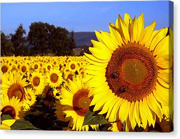 Sunny Day II Canvas Print