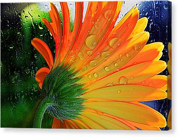 Sunny Days Ahead...... Canvas Print by Tanya Tanski
