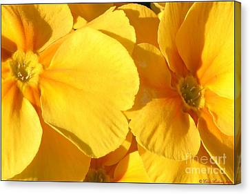 Sunny Disposition Canvas Print by Chris Anderson