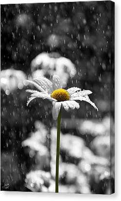 Sunny Disposition Despite Showers Canvas Print