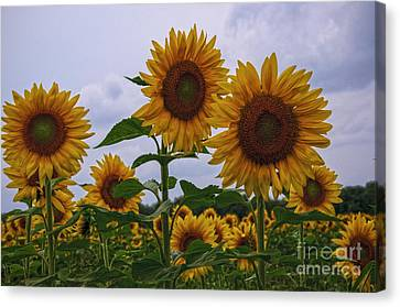 Canvas Print featuring the photograph Sunny Faces by Debra Fedchin