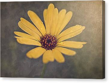 Sunny Canvas Print by Faith Simbeck