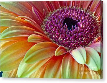 Sunny Gerber 2012 Canvas Print