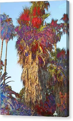 Sunny Palms Canvas Print by John Fish