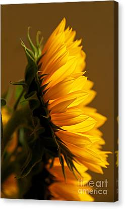 Sunny Profile Canvas Print by Bob and Nancy Kendrick