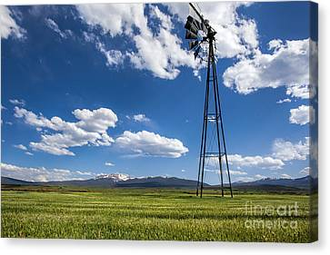 Sunny Side Up Canvas Print by Jim Garrison