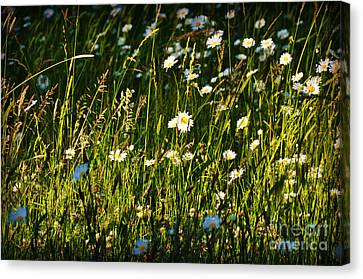 Canvas Print featuring the photograph Sunny Spot by Mindy Bench