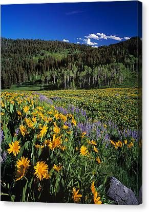 Sunny Spring Day Canvas Print by Leland D Howard