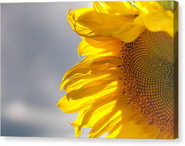 Canvas Print featuring the photograph Sunny Sunflower by Cheryl Baxter