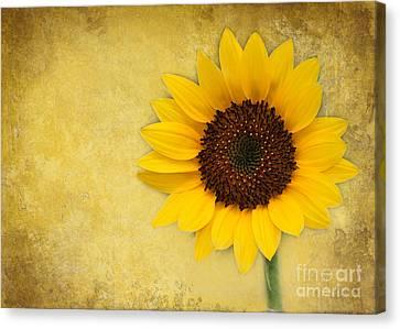 Florida Flowers Canvas Print - Sunny Sunflower by Sabrina L Ryan