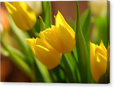 Canvas Print featuring the photograph Sunny Tulips by Erin Kohlenberg