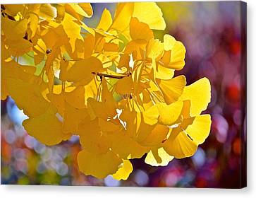 Sunny Yellow Ginkgo Canvas Print