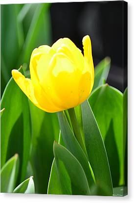 Sunny Yellow Tulip Canvas Print by Maria Urso