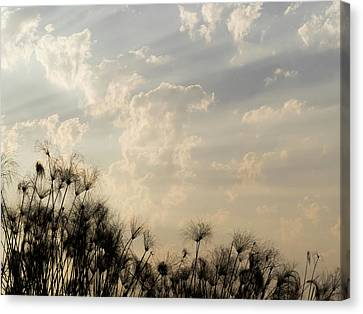 Sunrays Above Papyrus Plants, Okavango Canvas Print by Panoramic Images