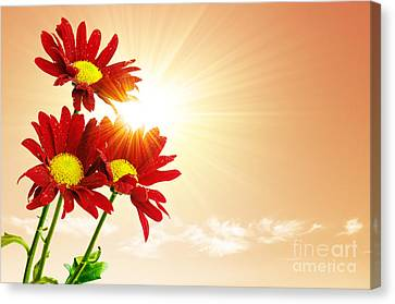 Sunny Canvas Print - Sunrays Flowers by Carlos Caetano