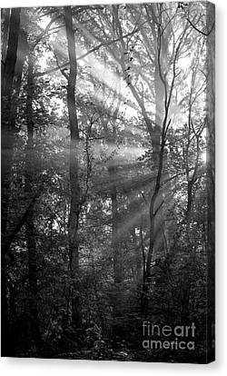 Sunrays Through The Trees In Black And White Canvas Print by Natalie Kinnear