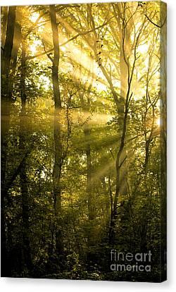 Sunrays Through The Trees Canvas Print by Natalie Kinnear