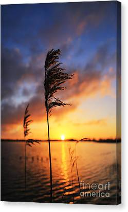 Sunrise @ The Lake Canvas Print by LHJB Photography