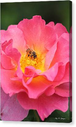 Canvas Print featuring the photograph Sunrise by Amy Gallagher