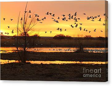 Canvas Print featuring the photograph Sunrise And Geese by Ruth Jolly