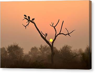 Sunrise At Bharatpur Canvas Print by Fotosas Photography