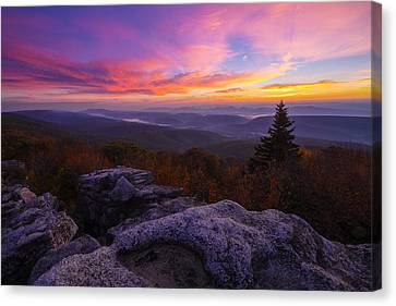 Sunrise At Dolly Sods In West Virginia Canvas Print