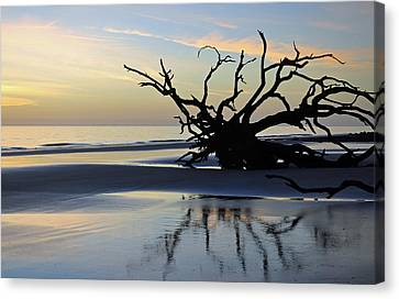 Sunrise At Driftwood Beach 6.6 Canvas Print