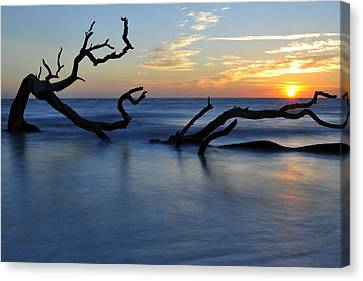 Sunrise At Driftwood Beach 7.3 Canvas Print