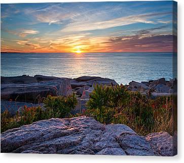 Sunrise At Otter Cliffs Canvas Print by Darylann Leonard Photography