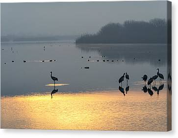 Sunrise Over The Hula Valley Israel 1 Canvas Print