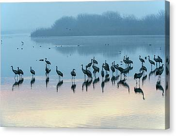 Sunrise Over The Hula Valley Israel 5 Canvas Print