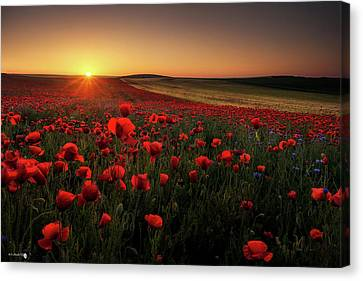 Sunrise Between Poppies Canvas Print